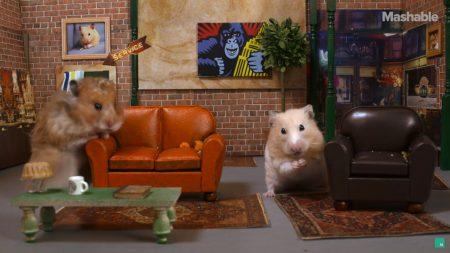 Friends revisité par des hamsters
